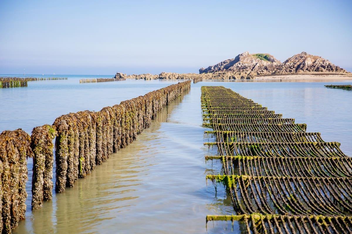 Sortie Grande Marée à Saint-Cast-le-Guildo